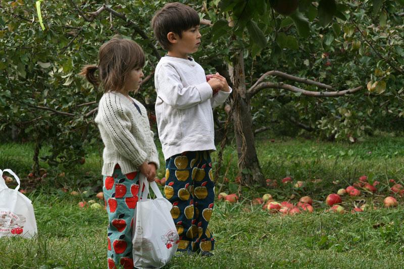 apples5